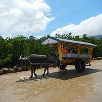 ピナイサーラ滝壺&由布島水牛車観光