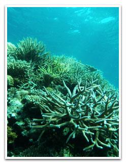 珊瑚が発達したポイント